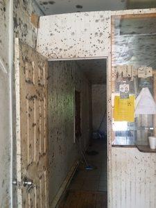 Mold Infestation