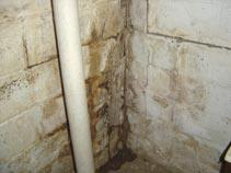 Water Damage In Basement Induced Mold Growth
